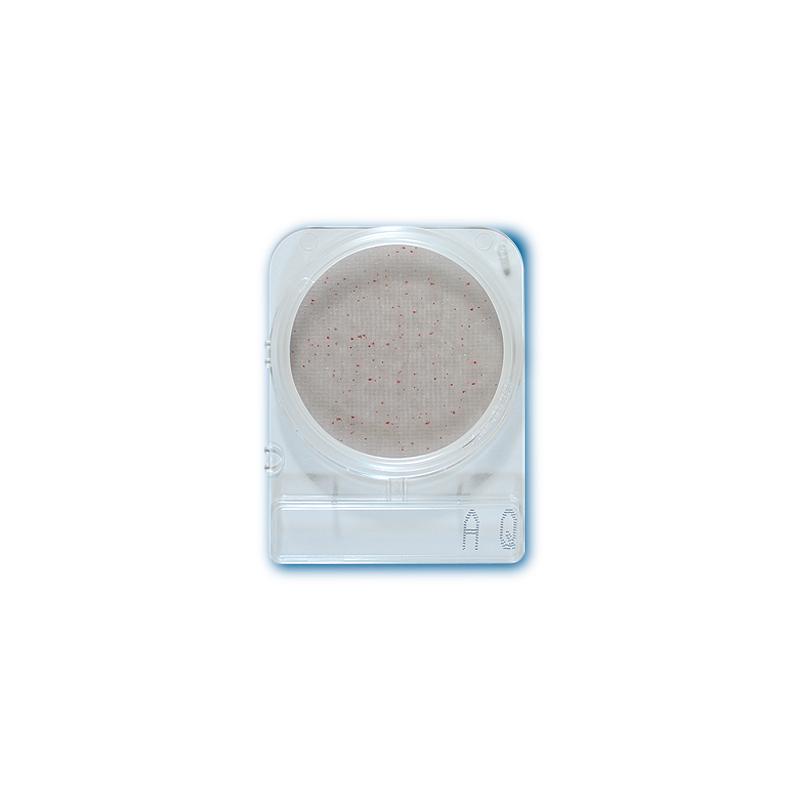 Compact Dry AQ mikrobiológiai gyorsteszt  heterotróf baktériumok ivóvízből történő meghatározásához